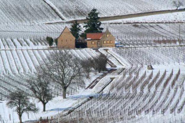 Weinwanderung online mit Essen der Winter