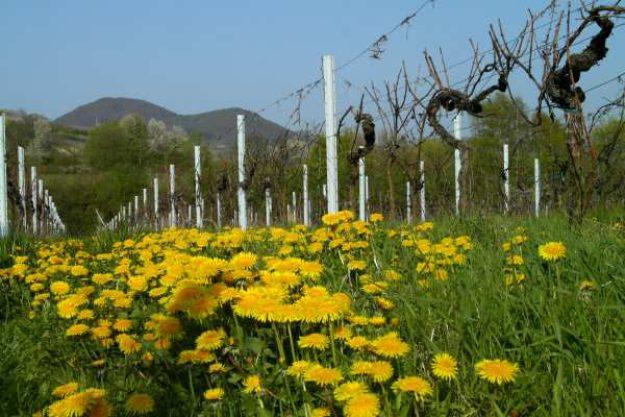 Weinwanderung online mit Essen der Sommer