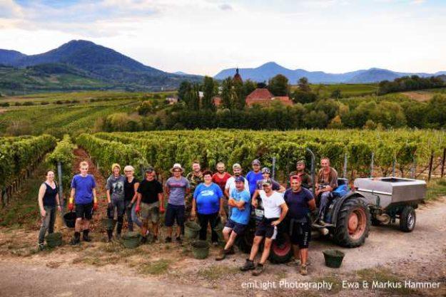 Weinwanderung online mit Essen die Crew
