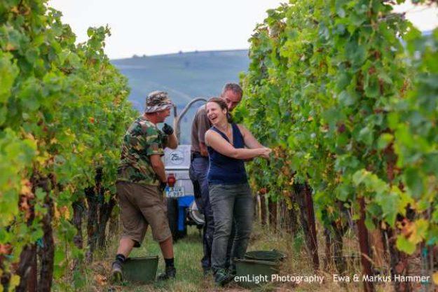 Weinwanderung online mit Essen Bei der Arbeit
