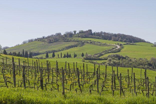 Weinprobe in Radebeul – Weinberg