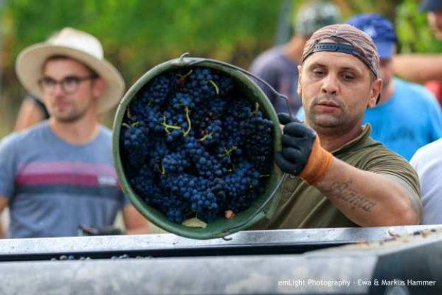 Weinwanderung online mit Essen Weinlese