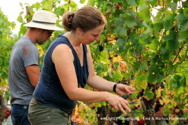Weinwanderung online mit Essen Weinlese mit Barbara Roth