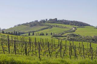 Betriebsausflug Stuttgart mit Weinwanderung  Weinwanderung durchs Remstal