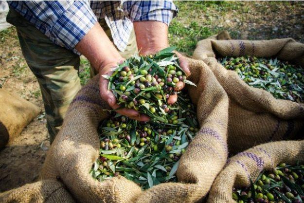 Olivenöl-Tasting at Home – Oliven