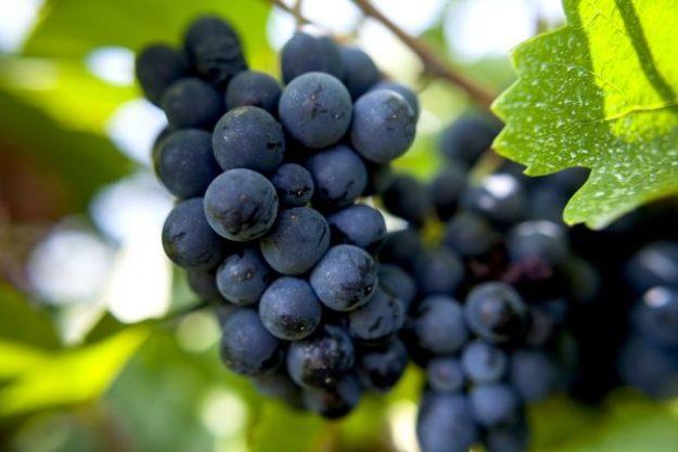 Weinprobe@Home –Weingut Wilhelmshof