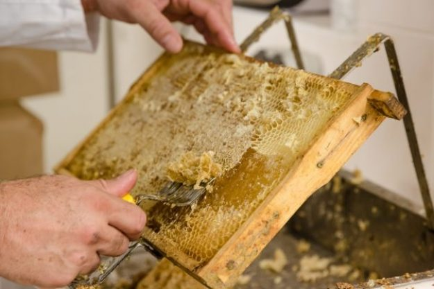 Honig-Verkostung – Honig Herstellung