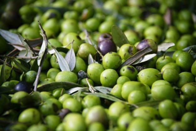 Olivenöl-Tasting at Home – Grüne Oliven aus Spanien